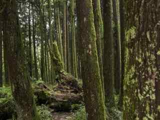 森林风景高清桌面壁纸
