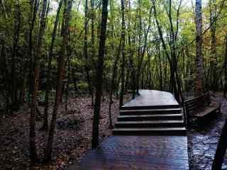 森林风景护眼桌面壁纸