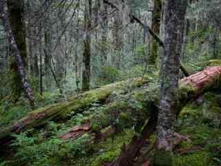唯美森林风景摄影桌面壁纸