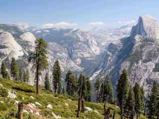 森林唯美风景护眼壁纸