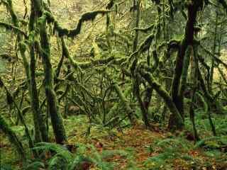夏日绿色森林风景摄影壁纸