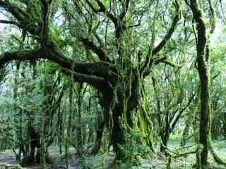 绿色森林唯美风景护眼壁纸