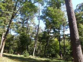 绿色森林护眼风景壁纸