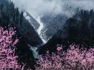 毕业旅行地之好看的西藏桃林