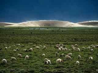 毕业旅行地之西藏草地风景