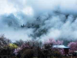 毕业旅行地之西藏桃林风景