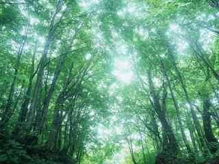 小清新森林风景护