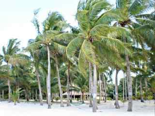 夏日海边椰林风景桌面壁纸