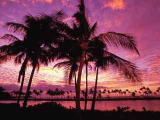 海边美丽的火烧云下的椰林风景壁纸