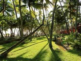 夏日椰林风景高清桌面壁纸