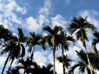 蔚蓝天空下的椰林风景壁纸