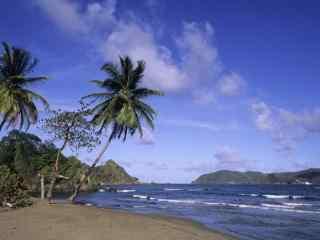 好看的海边椰林风景壁纸