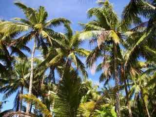 绿色海边椰林风景护眼壁纸