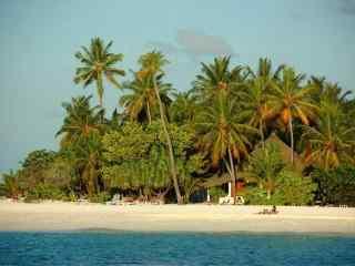 海边椰林风景桌面壁纸