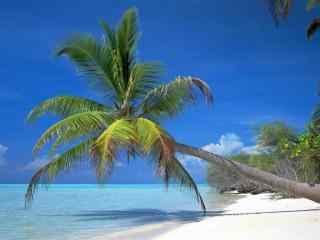 小清新海边椰林桌面壁纸