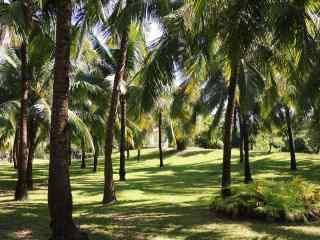 小清新绿色海边椰林风景图片