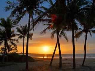 夏日黄昏时的椰林风景壁纸