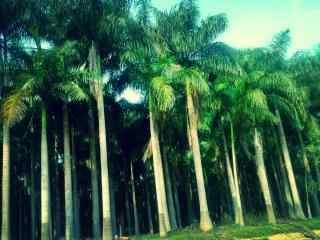 清新护眼海边椰林风景壁纸