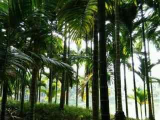 绿色海边风景之椰林桌面壁纸