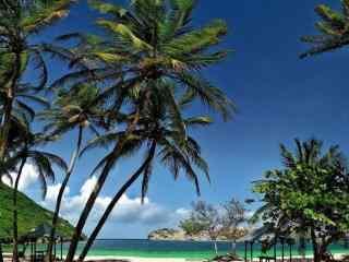 好看的夏日椰林风景壁纸