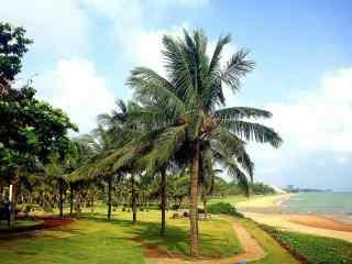 海边椰林风景高清桌面壁纸