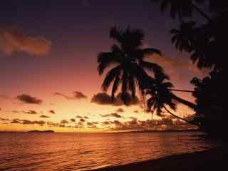 唯美的海边椰林黄昏风景壁纸