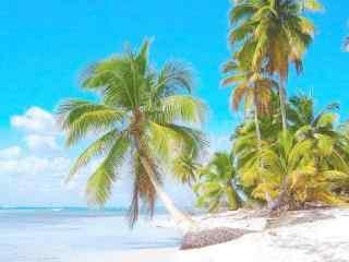 盛夏的海边椰林风景壁纸