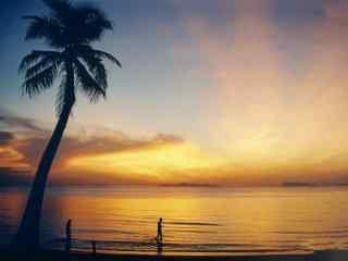黄昏下的海边椰林桌面壁纸