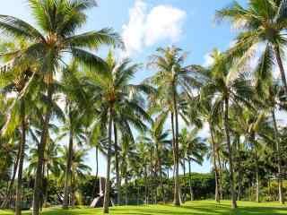 海边椰林风景护眼桌面壁纸