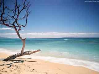 小清新夏威夷海边风景图片