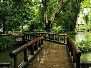 美丽的绿色风景桌