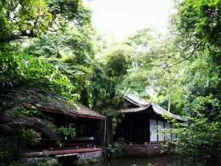 小清新绿色竹林风景壁纸