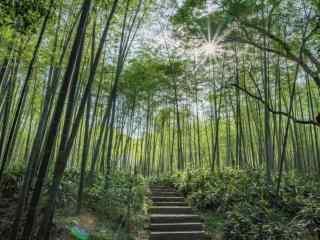 美丽的清新竹林风