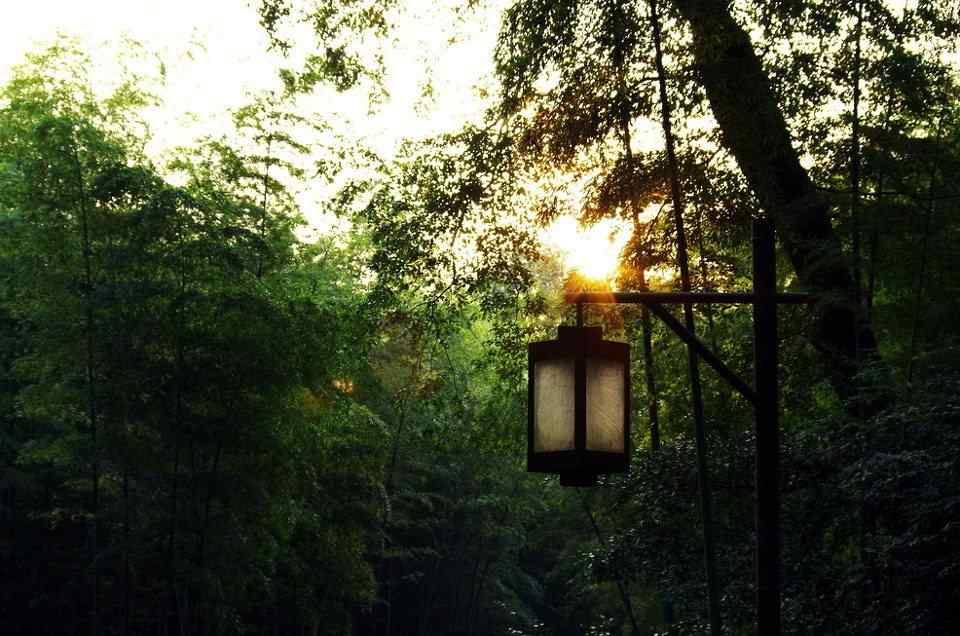 小清新竹林风景高清桌面壁纸