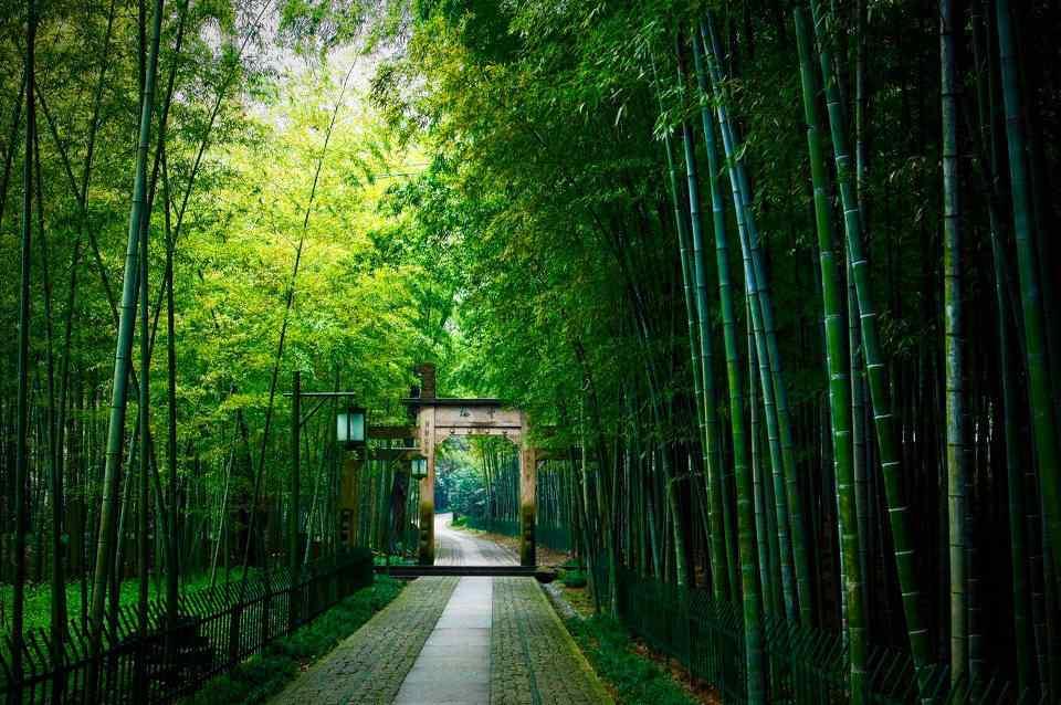 清新护眼竹林风景高清壁纸