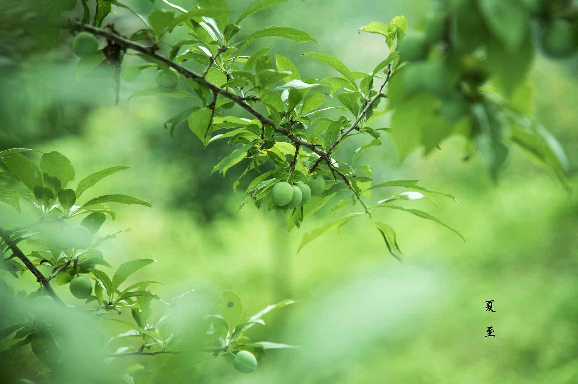 2017年夏至绿色风景护眼壁纸