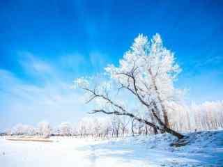 小清新吉林雾凇风景桌面壁纸