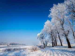 蔚蓝天空下的吉林雾凇桌面壁纸