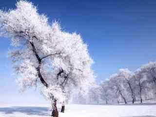 美丽的吉林雾凇风景图片壁纸