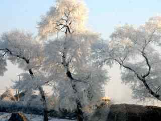 吉林雾凇风景图片壁纸