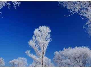 蓝天下的吉林雾凇桌面壁纸
