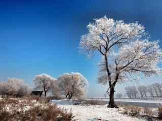 小清新唯美吉林雾凇风景壁纸