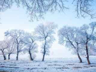 唯美的吉林雾凇风景图片壁纸