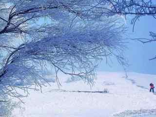 吉林雾凇唯美风景壁纸
