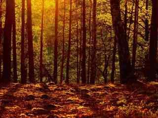 阳光下的密林风景