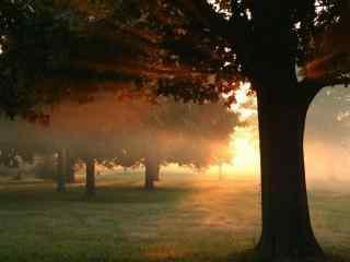清晨阳光下的树林风景壁纸