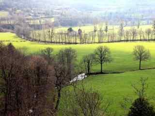 阳光下的青草野地风景壁纸