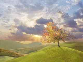 阳光下的树风景壁纸