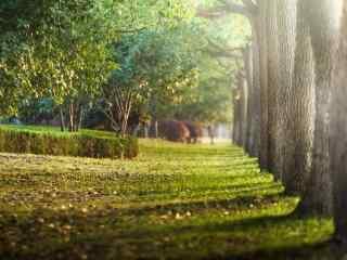 阳光下唯美的树林