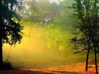 阳光下的树丛风景壁纸
